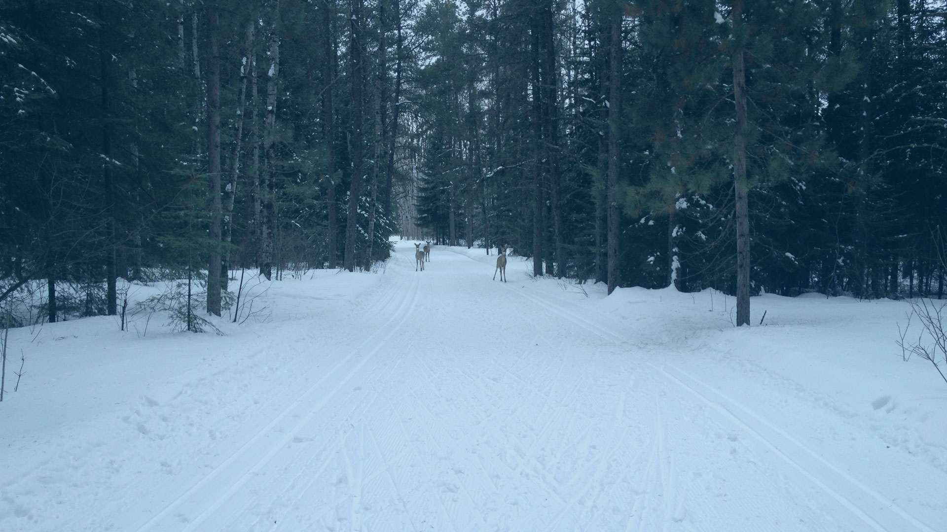 Kakabeka Falls Provincial Park Nordic Ski Trails